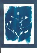 cyanotypes fleurs - 13