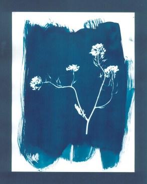 cyanotypes fleurs - 15