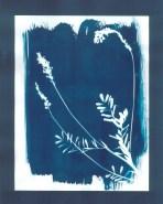 cyanotypes fleurs - 18