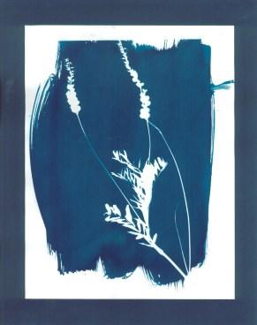 cyanotypes fleurs - 19