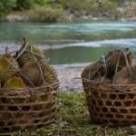 Keranjang Durian