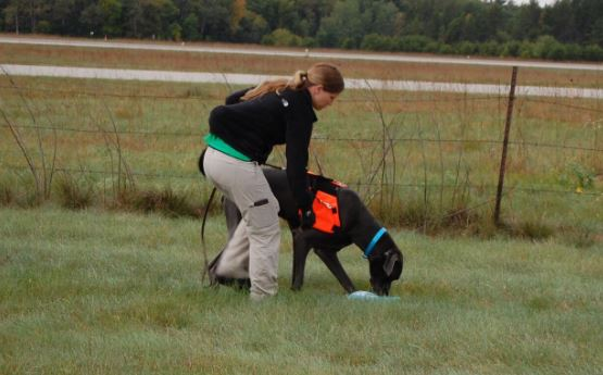 Training a dog to do scent work