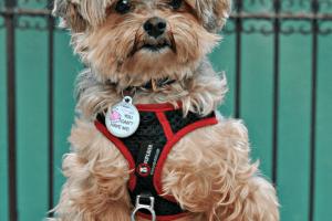Journey to Positive Dog Training