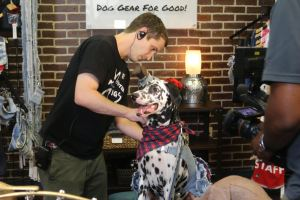 Custom Dog Fashion with Mister Migs
