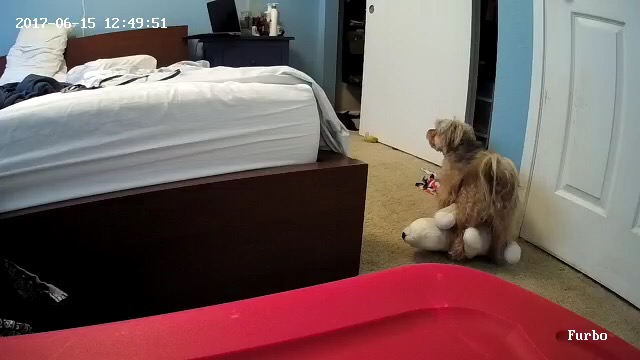 Spy on your dog with the Furbo