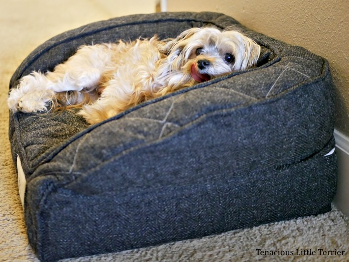 Brentwood Orthopedic Dog Bed 1