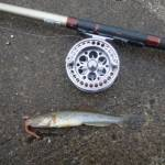 釣りたい&食べたいアノ魚!