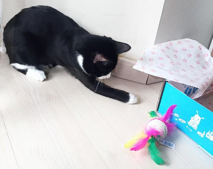 box pour les chats