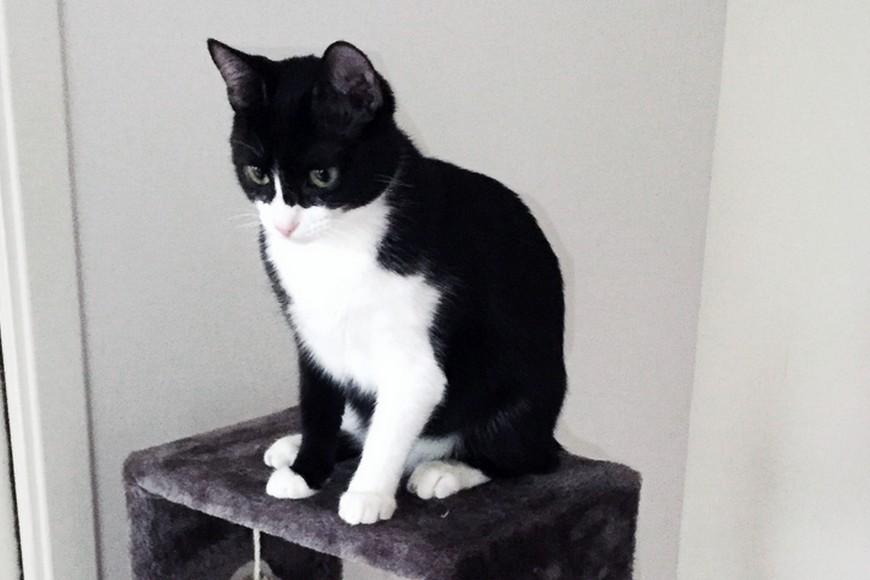 Adopter un chat en association Le chat libre toulouse