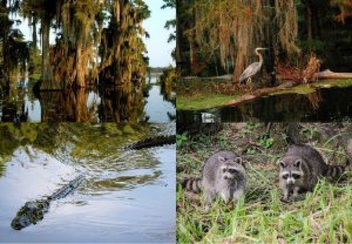 quadrivisite du bayou