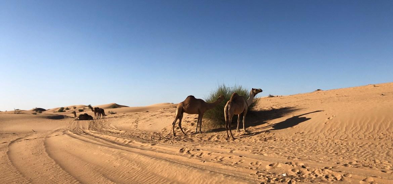 désert dubai trip 1 day