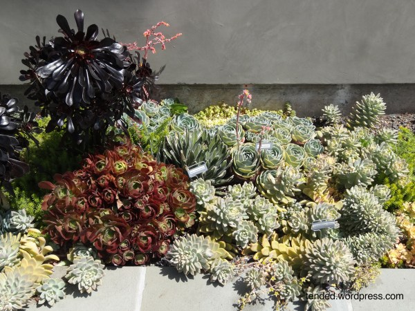 succulent garden ideas mixed