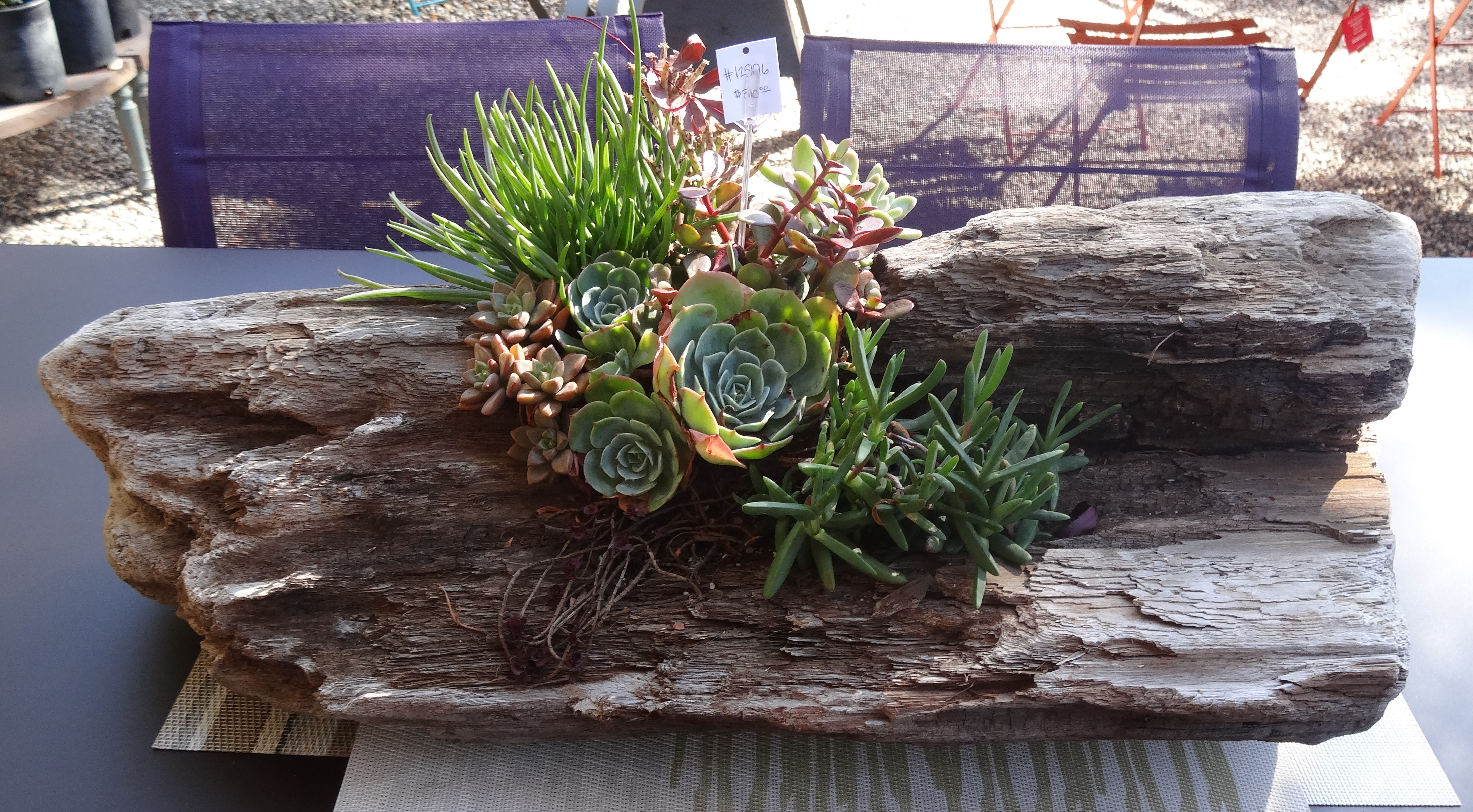 Garden T DIY Succulents In A Driftwood Planter Tended