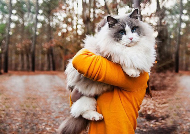 Os 20 Gatos Mais Fofos Do Mundo