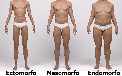Qué cuerpo tienes Ectomorfo, Mesomorfo o Endomorfo