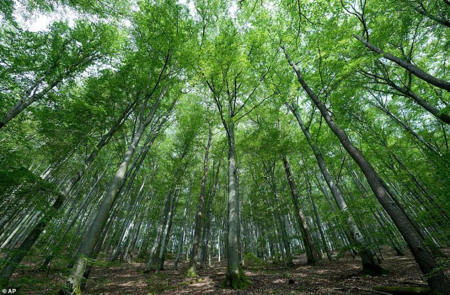 Beech trees are pictured in Bilstein on Tuesday in a characteristically German scene. The country has tightened entry requirements for British tourists