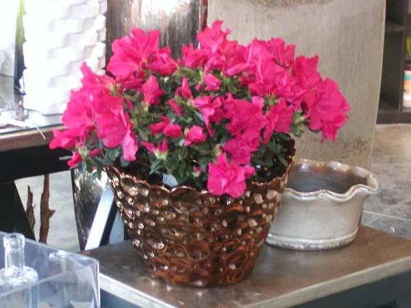 Plantas de interior con flor  Tendenziascom