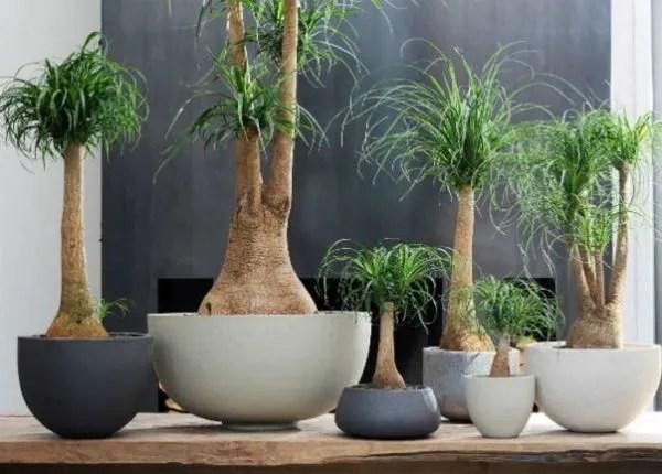 20 bonitas formas de decorar la casa con plantas de interior  Tendenziascom