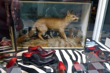 Fox at Edwards Shoes