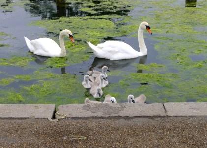 Little Beggars:  Hyde Park London