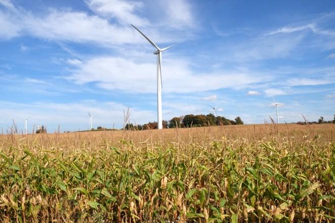 Buffalo Wind Turbines, 9/14, MJJ