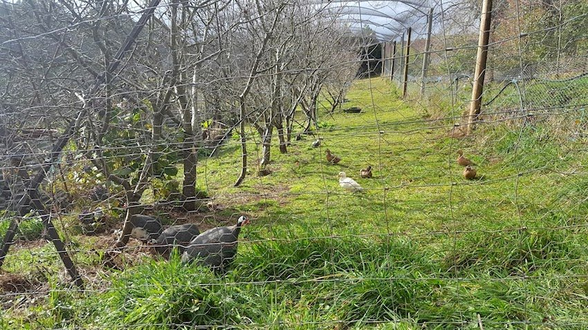 Telopea Mountain Permaculture Orchard 1