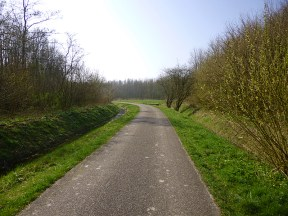 Small wooded area near Eenrum