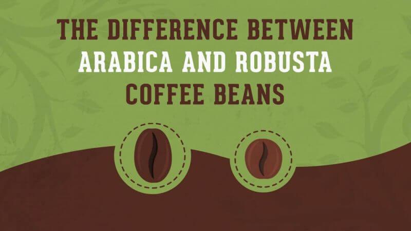 3 vizualne razlike arabice i robuste