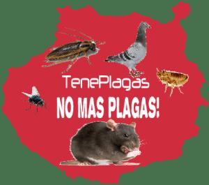 Fumigaciones las palmas - Gran Canaria