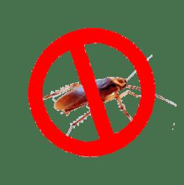 fumigar cucarachas en las palmas de gran canaria
