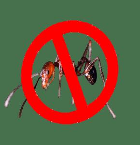 matar hormigas en las palmas