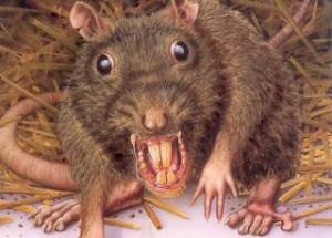 fumigaciones de Ratas