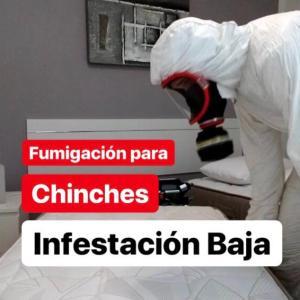 fumigacion para chinches