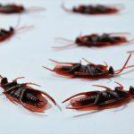 fumigaciones gran canaria teneplagas control de cucarachas