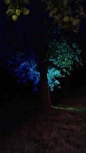 Le verger du Parc de l'Abbaye à Liessies, bel éclairage de Morane