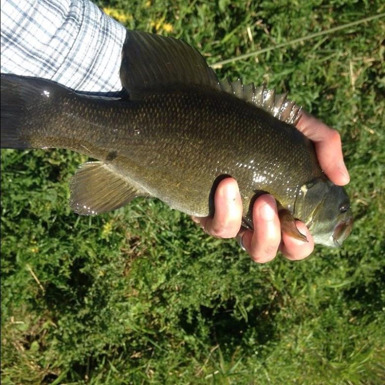 Lutes Sment W1516 - Adapting Tenkara for Smallmouth Bass - Dutch Creek Smallie