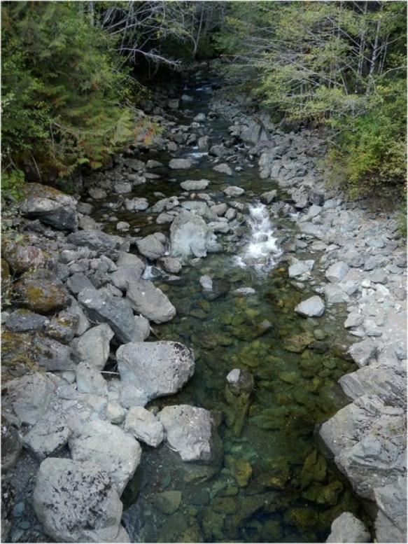 Boulder Creek Spilling Out of the Forest.jpg