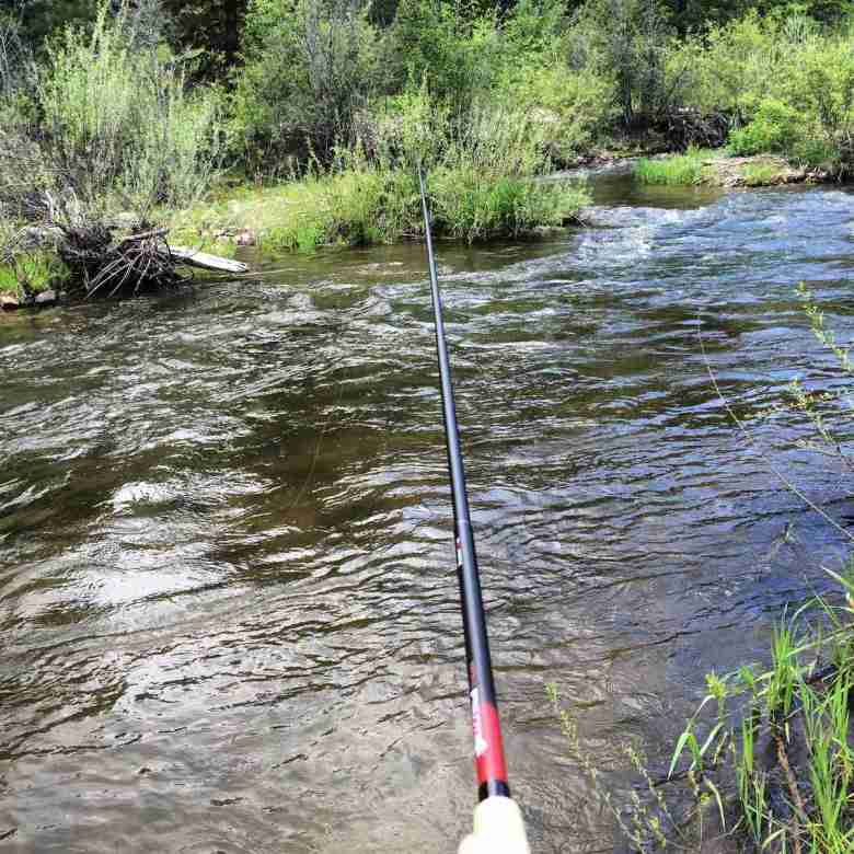 Diane Kelly-Riley - First Year Tenkara Angler - Mores Creek