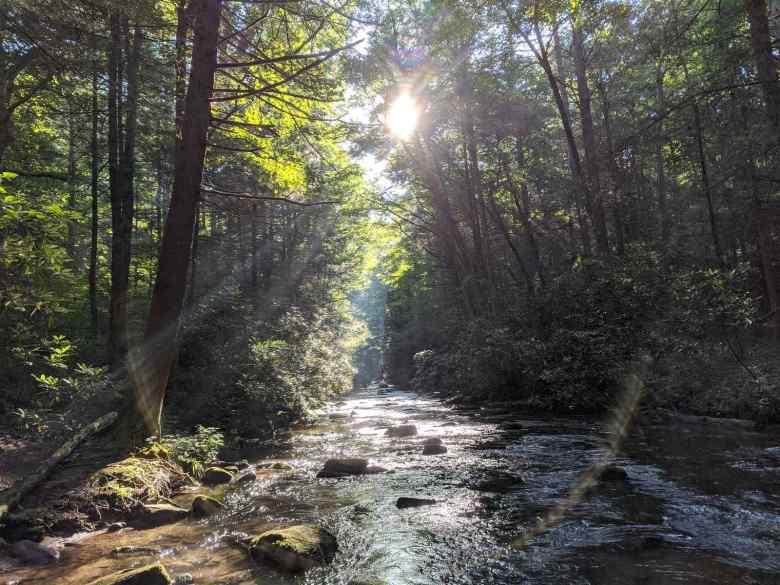 MIchael Agneta - North Georgia Tenkara - Sun peeking through trees
