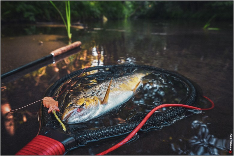 Vitaly Valasevich - Tenkara Belarus - trout