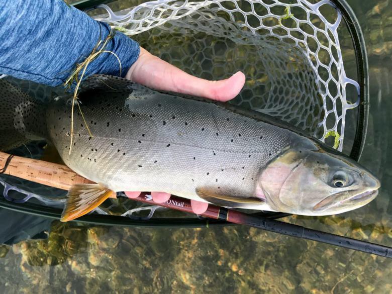 Interview - Brent Auger Dragontail Tenkara - BIG Fish