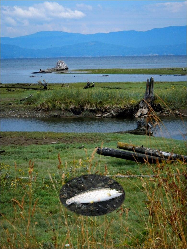 Rory Glennie - Estuarine Fixed Line Fishing - Sea Run Cutt