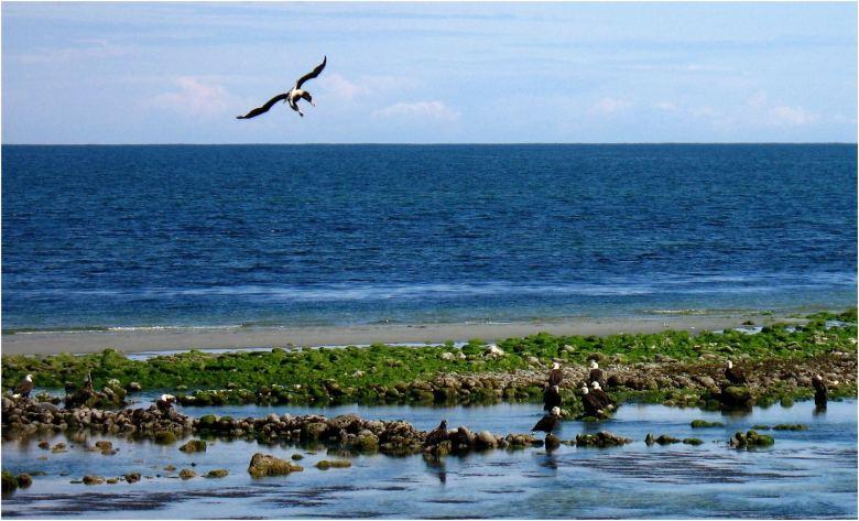 Rory Glennie - Estuarine Fixed Line Fishing - Eagles