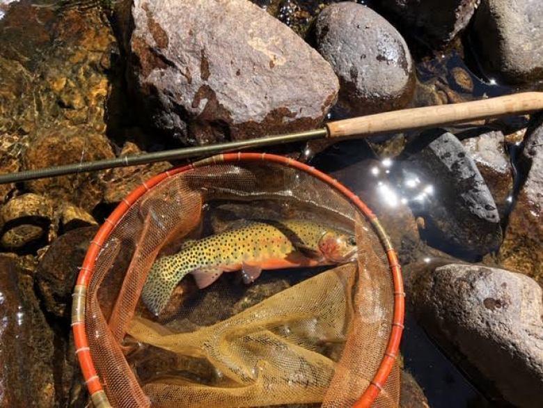 Adam Klagsbrun - Wrong Way to Fish Tenkara - tamo