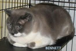 Bennet Kitty