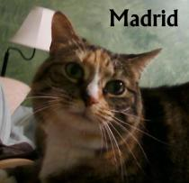 Madrid in her forever home!
