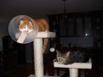 Oliver & Scarlet