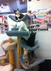 AAll 4 Kitties On the Cat Tree