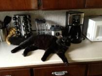jasper in command of the kitchen