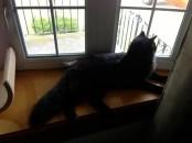 jasper in the window